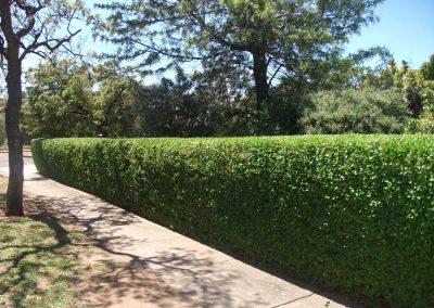 commercial gardening (5)